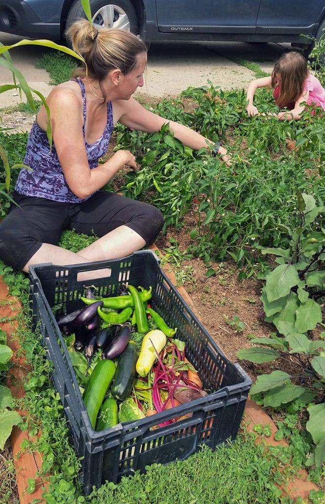 Harvesting with my garden helper.