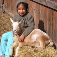Dwarf Goats in Wheat Ridge: Noise and Odor Questions