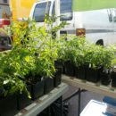 50% off all seedlings!